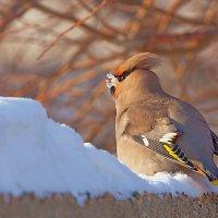 Закусить ранетки снегом :: Анатолий Иргл