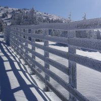 Тени на снегу :: Liliya