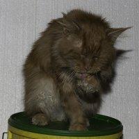 Мой кот Маркиз :: Александр Аксёнов