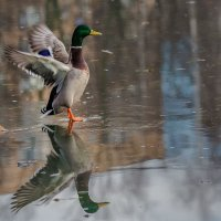Посадка на воду :: Андрей Лукашенко