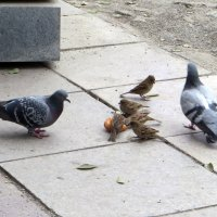 О птицах :: Наталья Джикидзе (Берёзина)