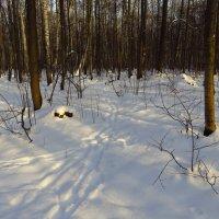 И какой русский не любит зиму и снег?! :: Андрей Лукьянов