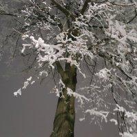 Снежный великан :: Вероника