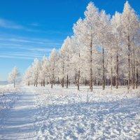 Мороз и солнце-день чудесный :: Татьяна Афанасьева
