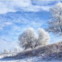 Январь, мороз и день чудесный! :: Алексей Румянцев