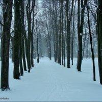 В парке бродит зима.... :: °•●Елена●•° Аникина♀