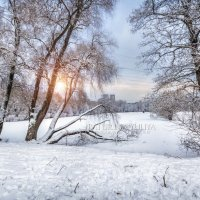 Зима в городском парке :: Юлия Батурина