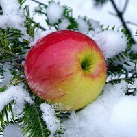 *Яблоки на снегу-2* :: Вячеслав