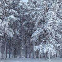 В зимнем лесу :: Татьяна Афанасьева