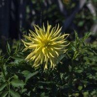 Солнышко в саду :: gribushko грибушко Николай