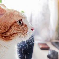 Мой любимый розовый носик. :: Ирина Кузина