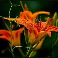 Обычные цветы в лучах  солнца. :: Юрий ГУКОВЪ