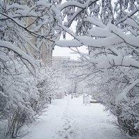 Снежные узоры :: Елена Семигина