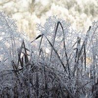 Зимние творенья с морозным вдохновеньем..) :: Лилия .