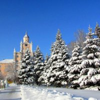 Ели в снегу :: Владимир