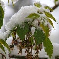 У природы нет плохой погоды... :: Татьяна Панчешная