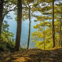 Море и сосны. :: Олег Бабурин