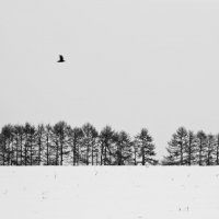 winter :: Svetlana Orinina