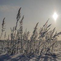 зима :: Николай Колобов