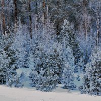 В сказочном лесу :: Татьяна Соловьева