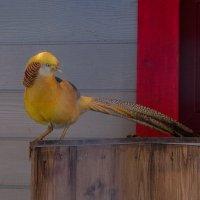 пти :: Мария Щер