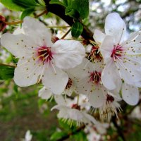 Весна :: Сергей Карачин
