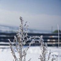 Зима :: Алексей Екимовских