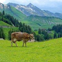 Щвейцарский пейзаж :: Анатолий Иргл