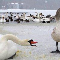 Кушай больше, мама сказала!!! :: Ирина Олехнович