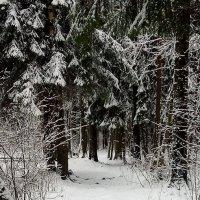 Прогулка в сказочном лесу :: Елена Павлова (Смолова)