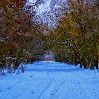 Зима зимняя :: Роза Бара
