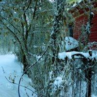зимние дворики :: Наталья Сазонова