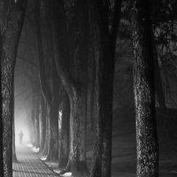 В тумане. :: Igor Shoshin