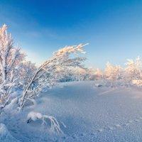 Зимний лес :: олег