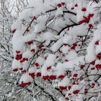 После снегопада :: OLLES