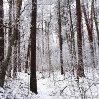 Зимой в Светлогорске :: Маргарита Батырева