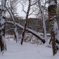Лесные иероглифы :: Наталья Кузнецова