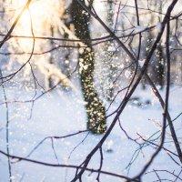 Волшебница Зима! :: Анастасия Жигалёва