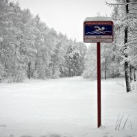 Бирюлёвский дендропарк :: Артур Т.