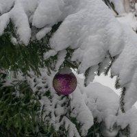 Свежий снег :: Владимир Орлов