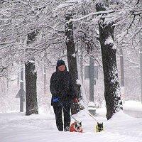 Январь вокруг дома моего. :: Владимир Драгунский