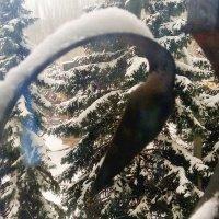Мобильное фото #6. Последний день января - 5 снежных фото :: Наталья (ShadeNataly) Мельник