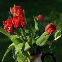 Любимые тюльпаны :: Татьянка ***