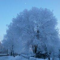 Январским вечером ... :: Алёна Савина