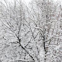 деревья  как  в  сказке) :: Наталья Чернушкина