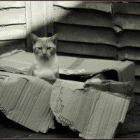 Хозяин коробки... :: Пётр Галилеев