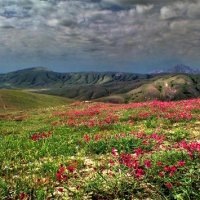 весна покрыла склоны гор цветами радуги и света :: viton