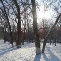 Мороз и солнце... :: Тамара (st.tamara)