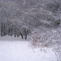 в зимнем парке :: Анна Воробьева