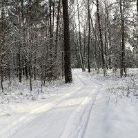 По лесным дорогам с ф/камерой :: Милешкин Владимир Алексеевич